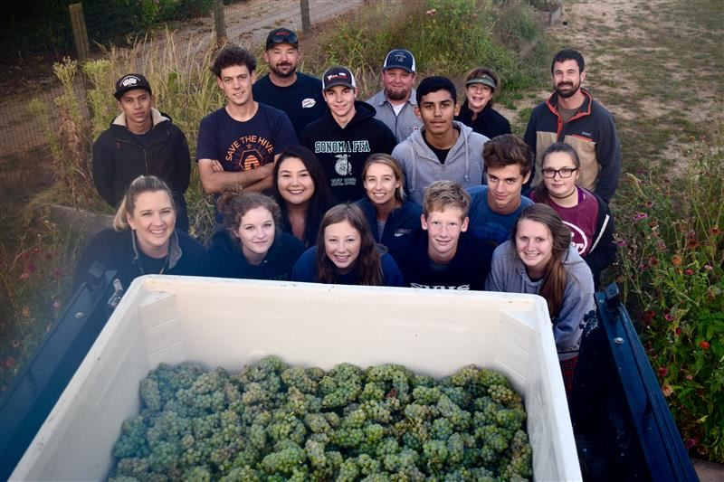 Viticulture First Harvest